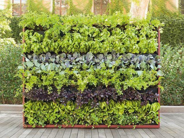 keuntungan melakukan vertical garden