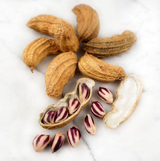 Kelebihan Kacang Lurik NTT