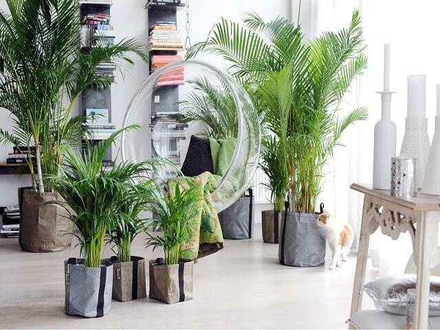 tanaman hias penghasil oksigen