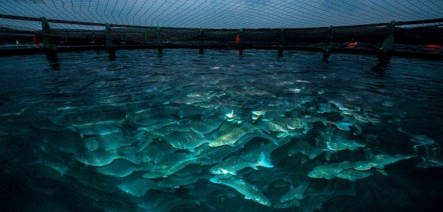 Budidaya Ikan Perairan