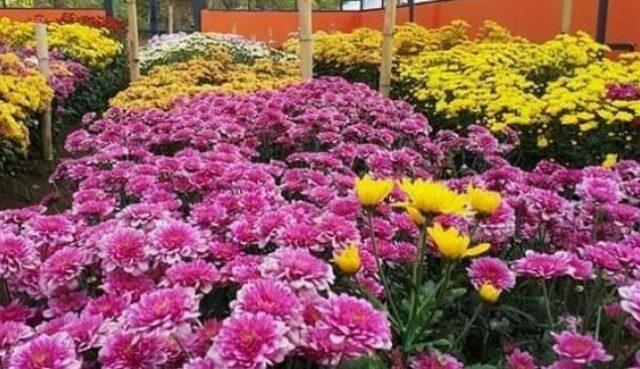 Mengenal Tanaman Florikultura