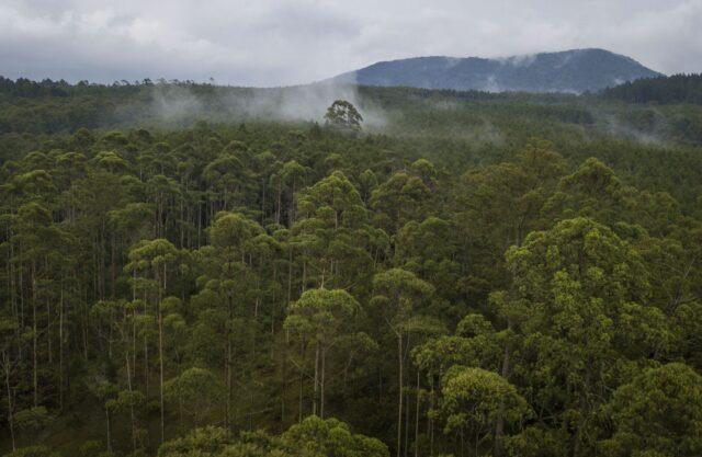 Kesatuan Pengelolaan Hutan (KPH)