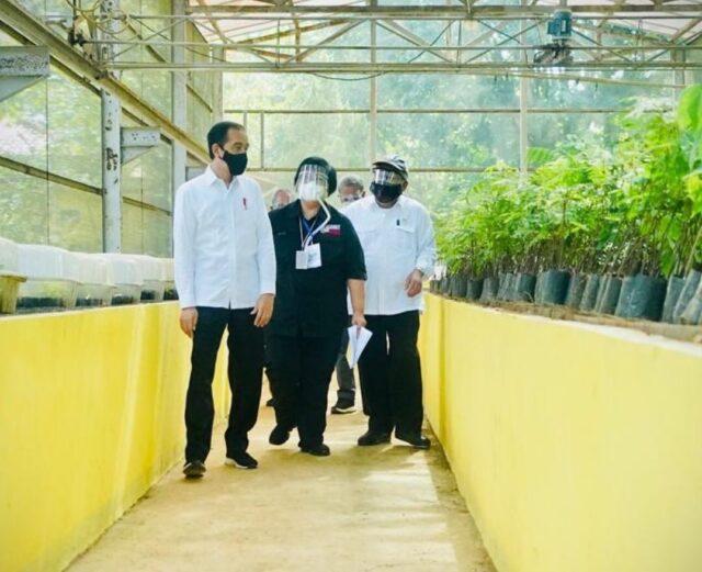 Pusat Perbenihan dan Riset Hutan Tropika