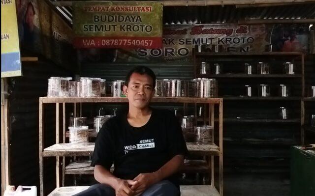 bisnis ternak semut kroto