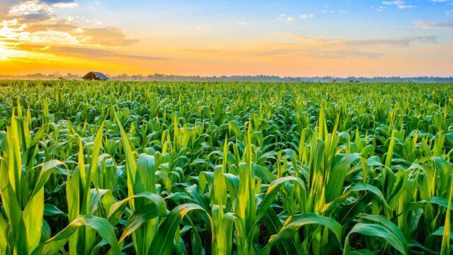 Tin Agroindustrial International Week