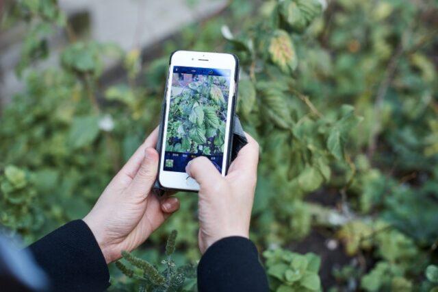 Aplikasi prediksi penyakit tanaman