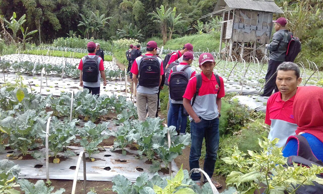 Pusat Pelatihan Pertanian dan Pedesaan Swadaya