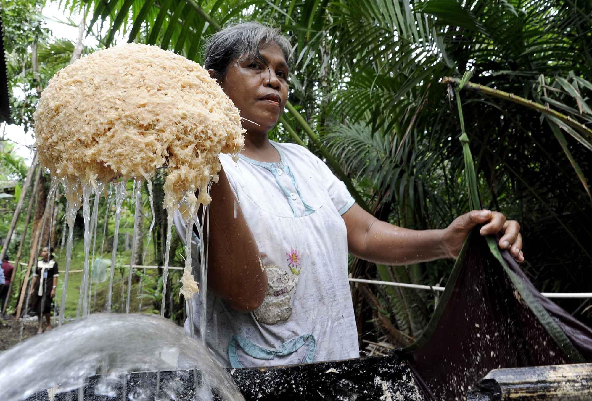 Masyarakat Papua Melakukan Budidaya Sagu