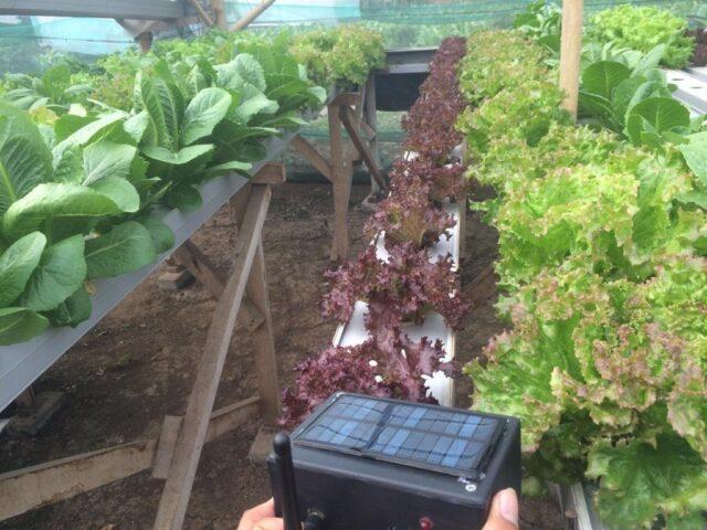 Kolaborasi Dosen UB KEmbangkan Sistem Pertanian Cerdas Menggunakan Smartphone