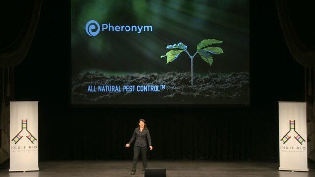 Startup Pheronym kembangkan biopestisida
