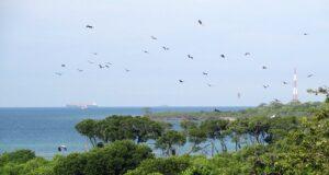 Suaka Margasatwa Pulau Rambut