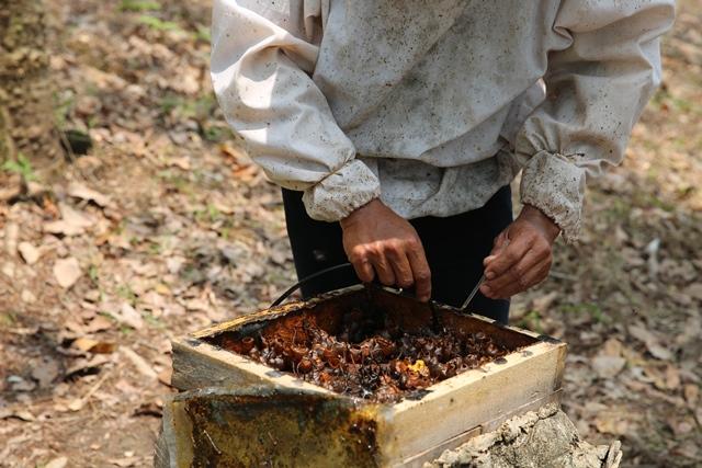 budidaya lebah madu trigona