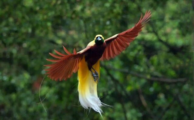 konservasi burung dan anggrek