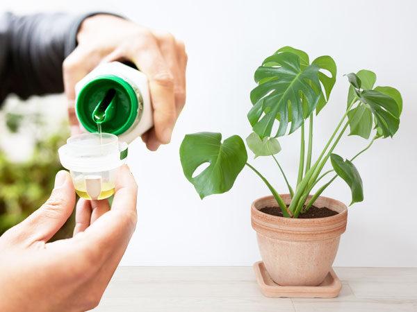 pupuk cair terbaik untuk tanaman hias