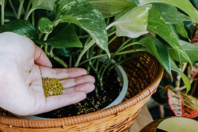 pupuk padat terbaik untuk tanaman hias