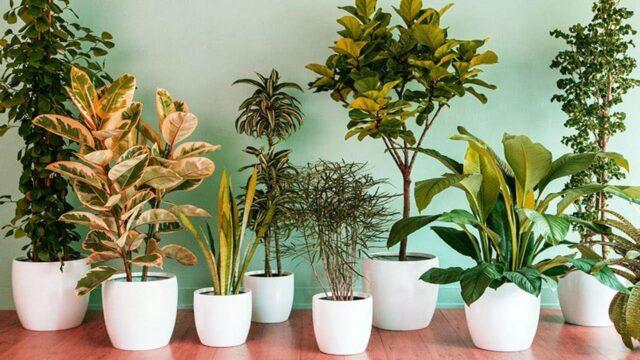 model tanaman hias favorit