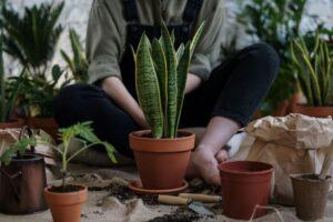 jenis tanaman hias tempat gelap